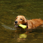 Dog Swimming games