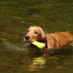 Dog Swimming games