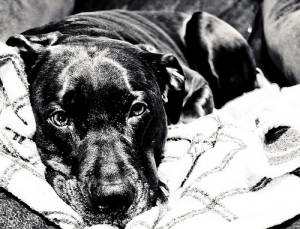 Dog Training Guide - Dog Photo of the week
